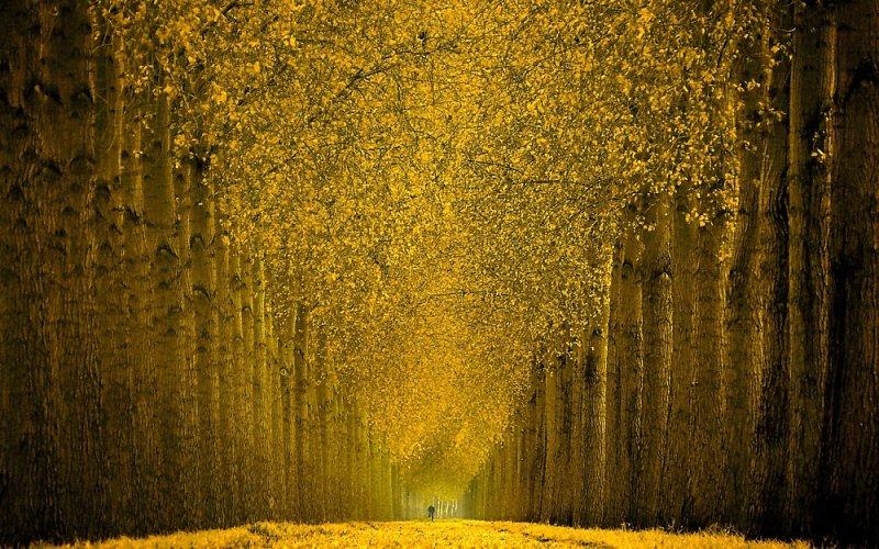 © Lars van de Goor - Cycle in gold