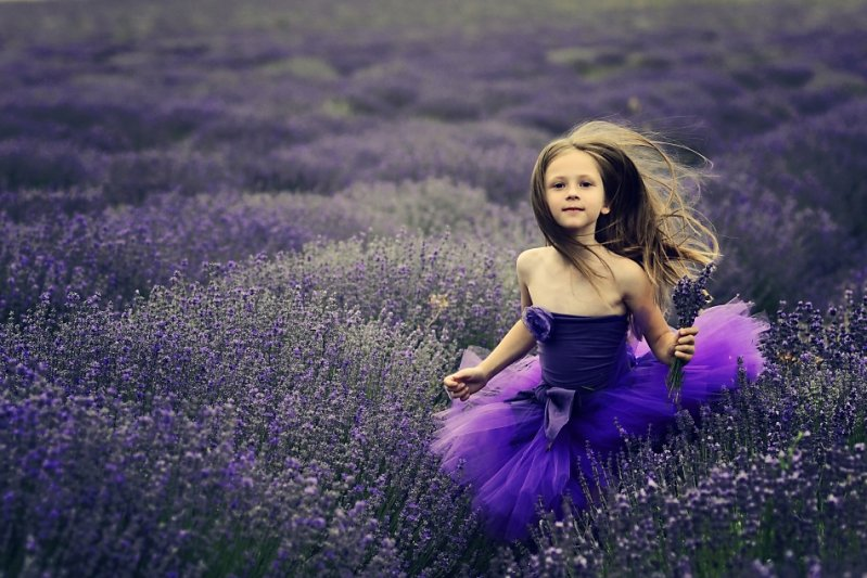 © Elena Karagyozova - purple summer