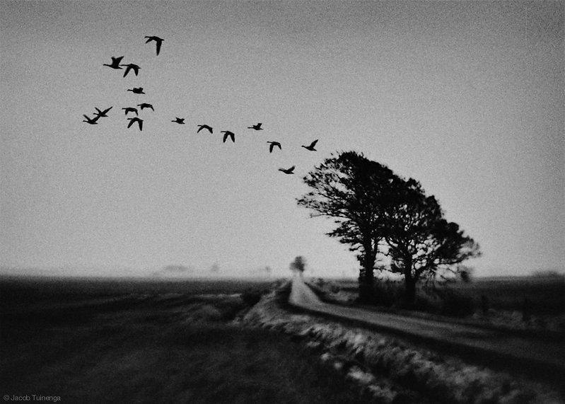 © Jacob Tuinenga - Mind ghost